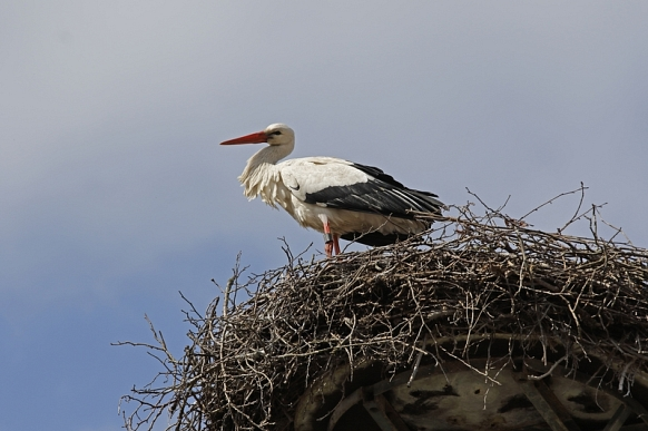 Storch im Nest in Burweg